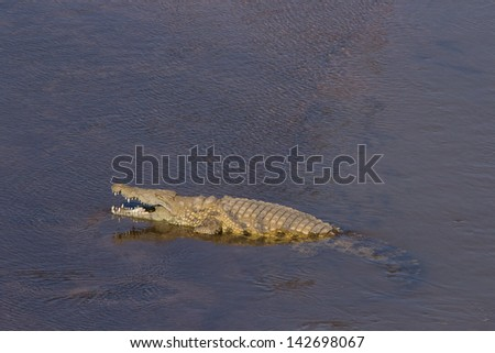 A Crocodile basking in the sun in the river - stock photo
