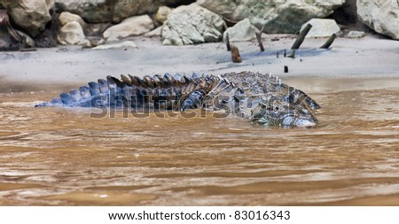 A crocodile with butterfly (Rio Grijalva, Sumidero) - Mexico, Latin America - stock photo