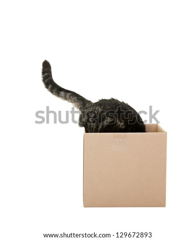 A curious tabby cat checking out a cardboard box.   Shot on white background. - stock photo