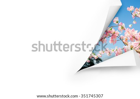 A cut blank page with a meadow, flowers and blue sky behind - stock photo