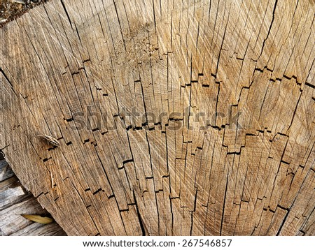 a cut of a tree trunk and grasshopper - stock photo