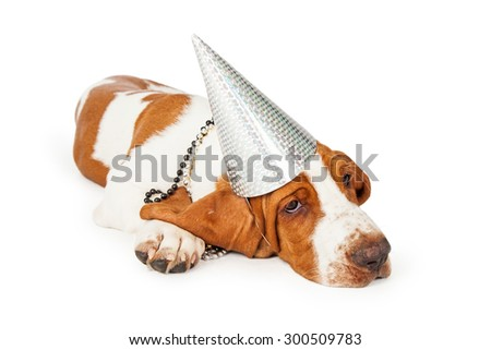 A cute and tired looking Basset Hound puppy dog wearing silver party hat. Dog is laying at an angle looking off to the side. - stock photo