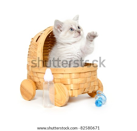 A cute baby kitten sitting inside of a toy stroller on white background - stock photo