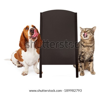 A cute Basset Hound dog and a tabby cat  both licking their lips and looking up at a blank chalk board sidewalk sign that is ready for you to enter your marketing message on - stock photo