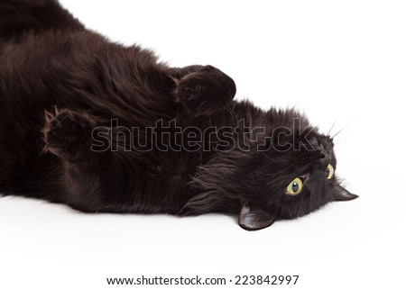 A cute black cat laying on its back looking up into the sky with paws curled towards body. - stock photo