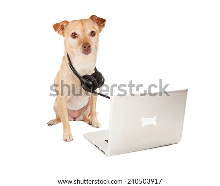 A cute Chihuahua and terrier crossbreed dog with a telephone headset sitting next to a computer with a bone emblem - stock photo