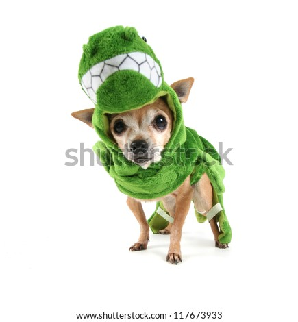 a cute chihuahua dressed up as a dinosaur - stock photo