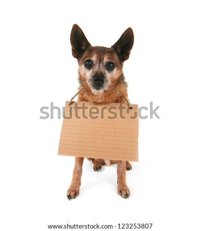 a cute chihuahua holding a sign - stock photo