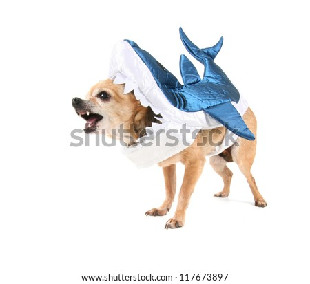 a cute chihuahua in a shark costume - stock photo