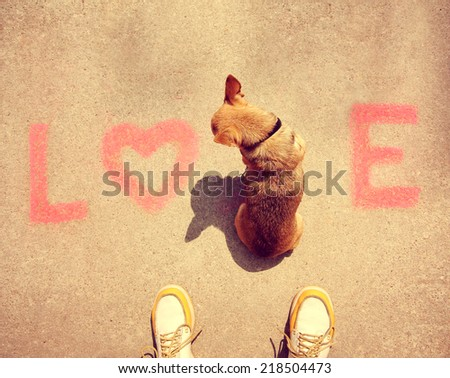 a cute chihuahua sitting in the word love on a sidewalk toned with a retro vintage instagram filter effect  - stock photo