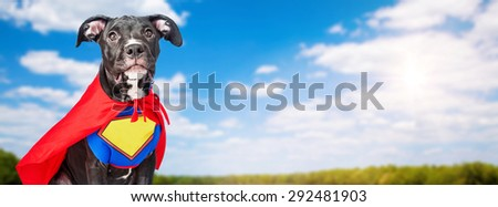 A cute crossbreed dog wearing a super hero costume in a field with blue sky and trees in the background - stock photo