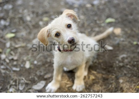 A cute curious puppy looking up. - stock photo