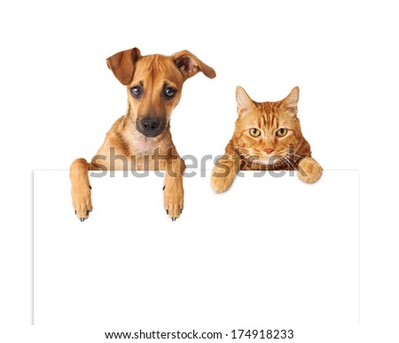 A cute dog and cat hanging over a blank white sign for you to enter your message on - stock photo