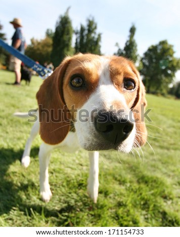 a cute dog at a local public park - stock photo