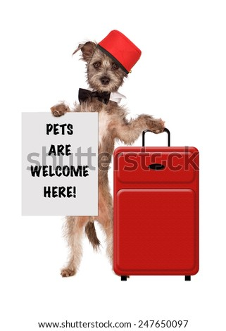 A cute dog dressed as a hotel bellhop with a red suitcase holding a sign saying Pets Are Welcome Here - stock photo