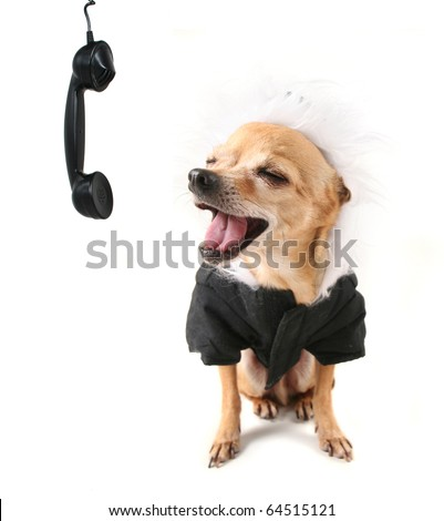 a cute dog dressed up in a coat - stock photo