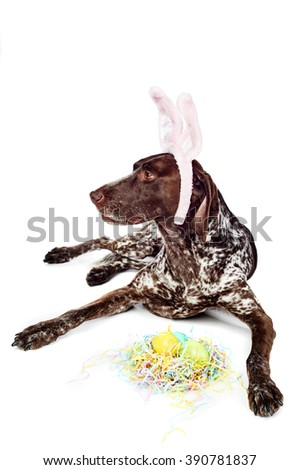 a cute dog wearing bunny ears for Easter - stock photo