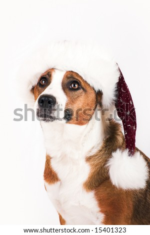 a cute dog with a christmas cap - stock photo