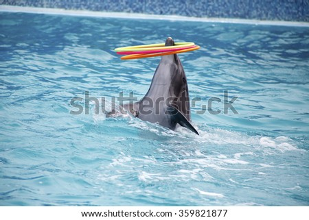 a cute dolphins during a speech at the dolphinarium - stock photo