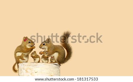 A cute family of squirrels enjoying seeds on a log in the Spring, the baby closest to the mother was the runt of the litter.  Part of a fun series. - stock photo