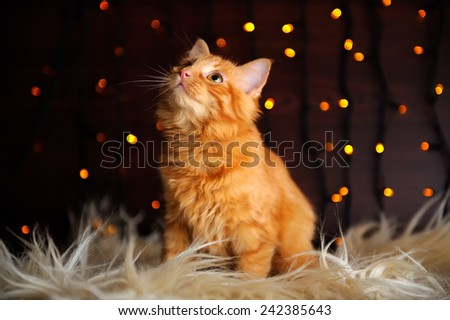 A cute fluffy red kitten against fairy lights background - stock photo