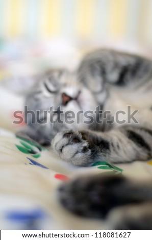 a cute gray cat / kitten sleeping - stock photo
