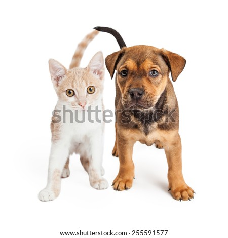 A cute kitten and a puppy standing together on a white background - stock photo