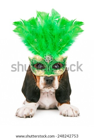 A cute little Basset Hound puppy dog wearing a green feather Mardi Gras mask - stock photo