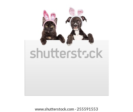 A cute little black kitten and puppy wearing Easter bunny ears with paws hanging over a blank white sign - stock photo