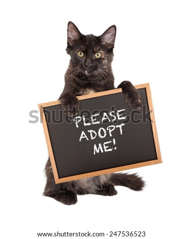 A cute little black kitten standing on hind legs holding a chalk board saying Please Adopt Me - stock photo