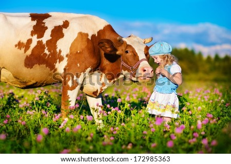 A cute little white girl in a blue cap feeding her big cow on a piece of bread in a green field with flowers on a sunny summer day  - stock photo