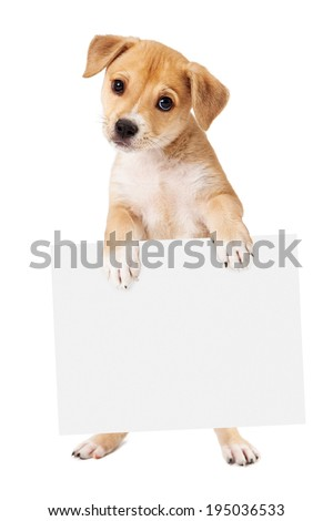 A cute mixed retriever mixed breed dog standing up and holding a blank sign for you to enter your marketing message onto - stock photo