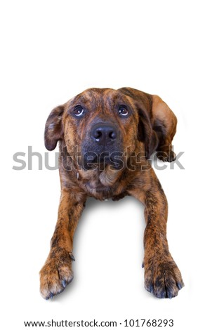 A cute puppy who thinks maybe he has done something wrong - stock photo