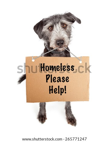 A cute scruffy terrier crossbreed shelter dog carrying a cardboard sign with the words Homeless Please Help. - stock photo