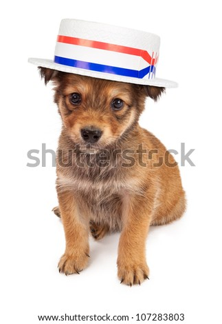 A cute tan color eight week old puppy puppy sitting against a white backdrop and wearing a politician hat - stock photo