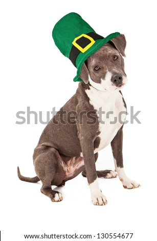 A cute terrier mixed breed dog wearing a tall green St. Patrick's Day hat - stock photo