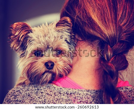 a cute yorkshire terrier peeking from around a woman toned with a retro vintage instagram filter effect app or action - stock photo