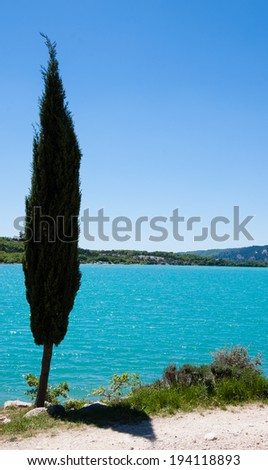 A Cypress tree over the turquoise water of St.Croix lake in Verdon. (Provence, France). The game of light and shadow. - stock photo