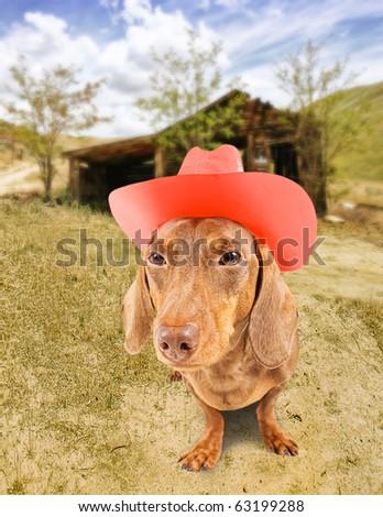 a dacshund dressed as a cowboy - stock photo