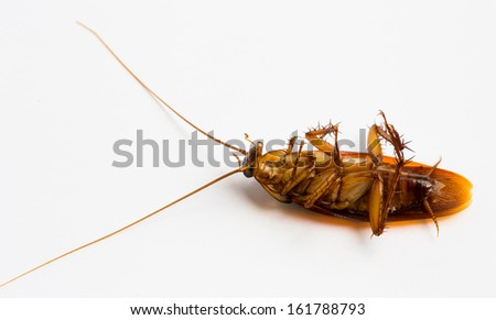 A dead cockroach isolated on white background  - stock photo