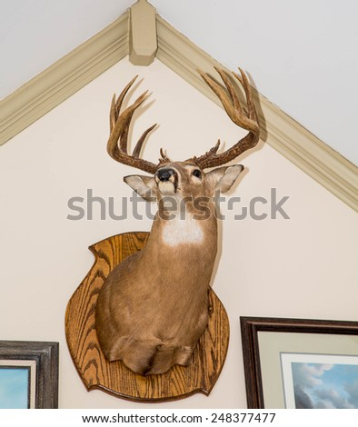 A deer head mounted on a white wall from below - stock photo