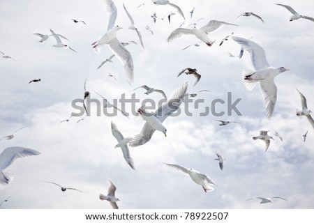 A dense flock of seagulls flying against a cloudy blue sky. - stock photo