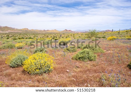 A desert landscape with a bright blue and white sky during springtime. - stock photo