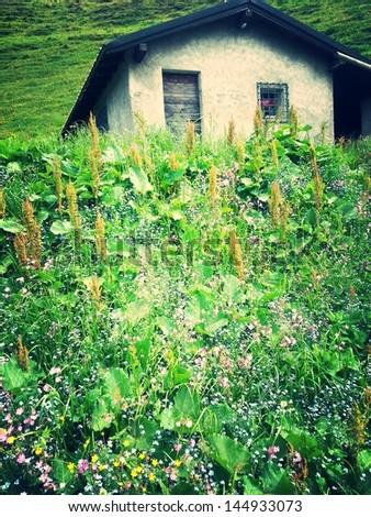 a detail of a garden - stock photo