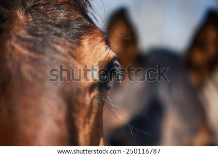A detail of a horse eye in a stable - stock photo