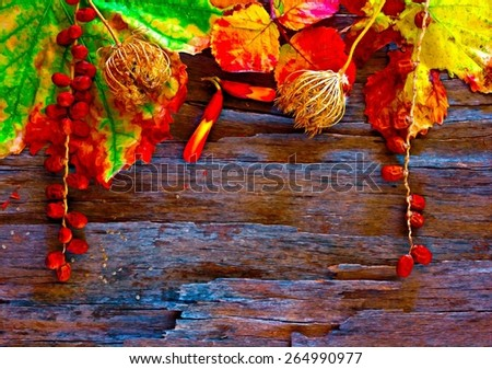 A digitally constructed painting of Colorful autumn leaves and pods arranged on stripped bark. - stock photo