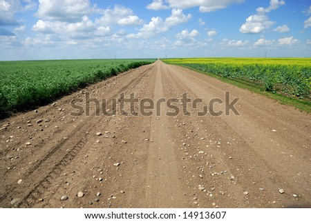 A dirt road in Saskatchewan farmland running between immature peas and canola crops. - stock photo