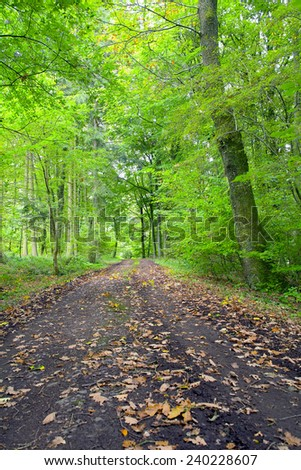A dirt road in the mixed forest (beech, oak and ash) in a sunny evening, by Beckingen, Saarland / Germany - stock photo