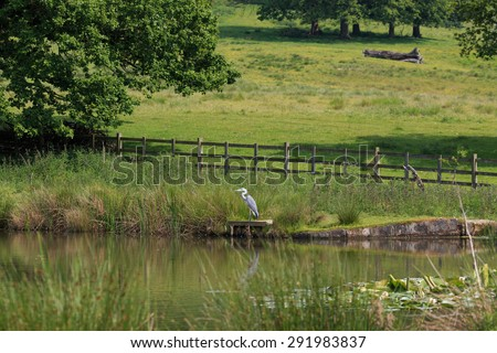 A distant Grey Heron watching for fish - stock photo