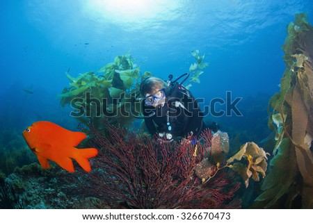 A diver discovers beautiful coral in California - stock photo